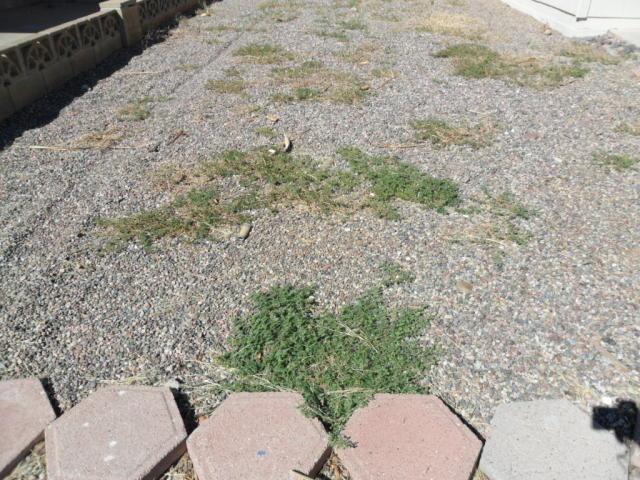 Weeds…Weeds…Weeds